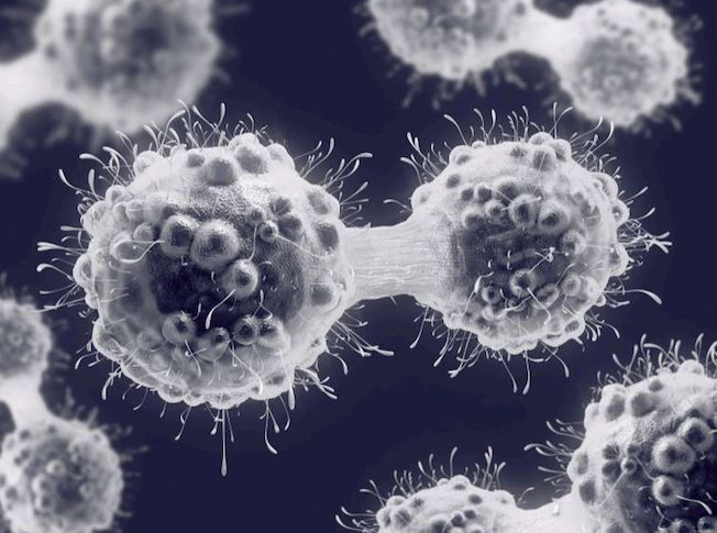 Cancer killing cells discovered by accident